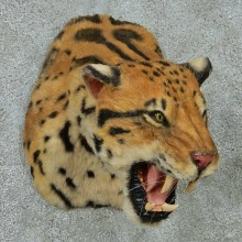 Reproduction Clouded Leopard Shoulder Mount