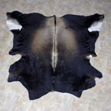 Brahma Bull Taxidermy Rug Hide #12334 For Sale @ The Taxidermy Store