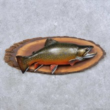 Brook Trout Freshwater Fish Mount For Sale #14094 @ The Taxidermy Store