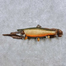 Brook Trout Fish Mount For Sale #14361 @ The Taxidermy Store