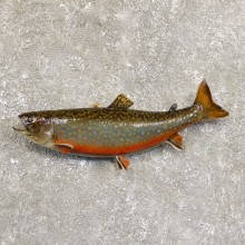 Brook Trout Fish Mount For Sale #19710 @ The Taxidermy Store