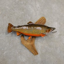 "19"" Brook Trout Taxidermy Fish Mount For Sale"