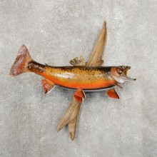 Brook Trout Fish Mount For Sale #20903 @ The Taxidermy Store