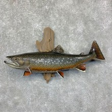 Brook Trout Fish Mount For Sale #21625 @ The Taxidermy Store