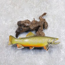 Brook Trout Fish Mount For Sale #22236 @ The Taxidermy Store