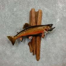Brook Trout Fish Mount For Sale #17780 @ The Taxidermy Store
