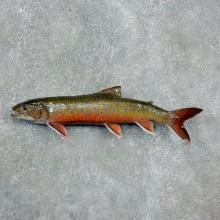 Brook Trout Fish Mount For Sale #17954 @ The Taxidermy Store