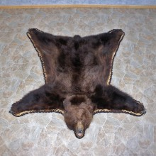 Brown Bear Taxidermy Rug with Mounted Head 12343 For Sale @ The Taxidermy Store