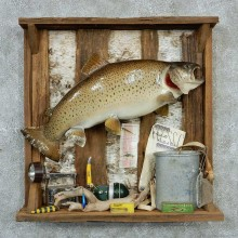 Captain's Classic Brown Trout Display Taxidermy Mount #13301 For Sale @ The Taxidermy Store