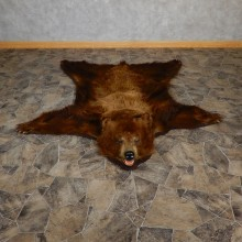 Chocolate Phase Black Bear Taxidermy Rug 18976 For Sale @ The Taxidermy Store