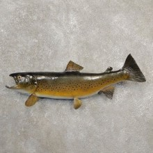 Brown Trout Fish Mount For Sale #20591 @ The Taxidermy Store