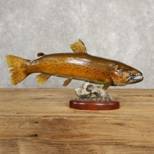 Brown Trout Fish Mount For Sale #20616 @ The Taxidermy Store