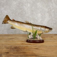 Brown Trout Fish Mount For Sale #20618 @ The Taxidermy Store