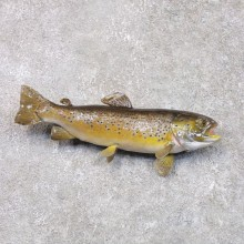 Brown Trout Fish Mount For Sale #22289 @ The Taxidermy Store
