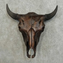 American Buffalo/Bison Skull Mount For Sale #16019 @ The Taxidermy Store