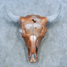 American Buffalo/Bison Skull Mount For Sale #15498 @ The Taxidermy Store