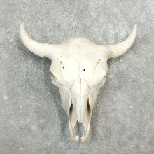 Buffalo Bison Skull Mount For Sale #17689 @ The Taxidermy Store
