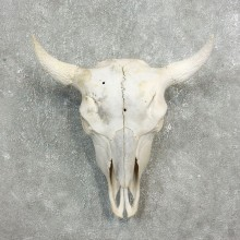Buffalo Bison Skull Mount For Sale #17692 @ The Taxidermy Store