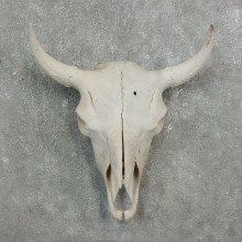 Buffalo Bison Skull Mount For Sale #17693 @ The Taxidermy Store