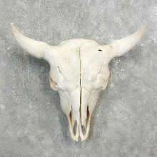 Buffalo Bison Skull Mount For Sale #17699 @ The Taxidermy Store