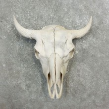 Buffalo Bison Skull Mount For Sale #17702 @ The Taxidermy Store