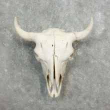 Buffalo Bison Skull Mount For Sale #17703 @ The Taxidermy Store