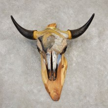Buffalo Bison Skull Mount For Sale #20303 @ The Taxidermy Store