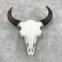 Buffalo Bison Skull Mount For Sale #22296 @ The Taxidermy Store