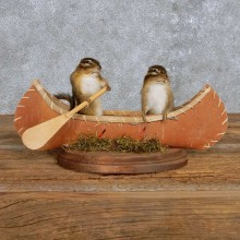 Novelty Canoe Chipmunks Taxidermy Mount For Sale