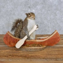 Novelty Canoe Squirrel Mount For Sale #14171 @ The Taxidermy Store