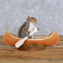 Novelty Canoe Squirrel Mount For Sale #14172 @ The Taxidermy Store