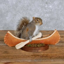 Novelty Canoe Squirrel Mount For Sale #14174 @ The Taxidermy Store