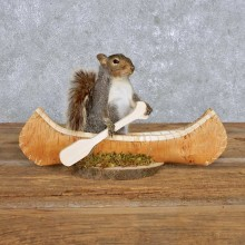 Novelty Canoe Squirrel Mount For Sale #14178 @ The Taxidermy Store