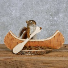 Novelty Canoe Squirrel Mount For Sale #14192 @ The Taxidermy Store