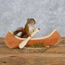 Novelty Canoe Squirrel Mount For Sale #14193 @ The Taxidermy Store