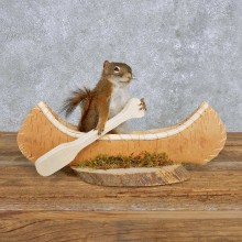 Novelty Canoe Squirrel Mount For Sale #14194 @ The Taxidermy Store