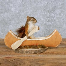 Novelty Canoe Squirrel Mount For Sale #14195 @ The Taxidermy Store