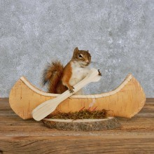 Novelty Canoe Squirrel Mount For Sale #14197 @ The Taxidermy Store