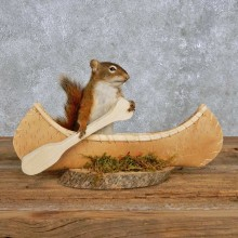 Novelty Canoe Squirrel Mount For Sale #14198 @ The Taxidermy Store