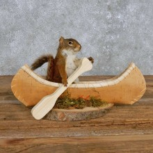 Novelty Canoe Squirrel Mount For Sale #14199 @ The Taxidermy Store
