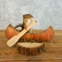 Canoe Chipmunk Novelty Mount For Sale #18487 @ The Taxidermy Store