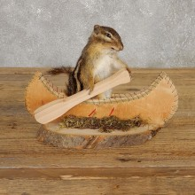 Novelty Canoe Chipmunk Taxidermy Mount For Sale