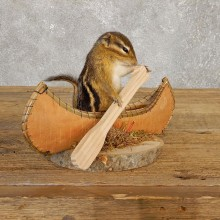 Canoe Chipmunk Novelty Mount For Sale #20125 @ The Taxidermy Store