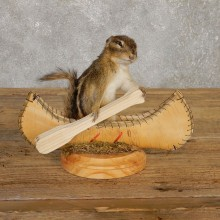Canoe Chipmunk Novelty Mount For Sale #20126 @ The Taxidermy Store