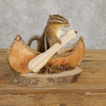 Canoe Chipmunk Novelty Mount For Sale #20128 @ The Taxidermy Store