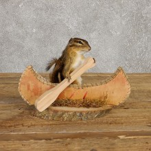Canoe Chipmunk Novelty Mount For Sale #20129 @ The Taxidermy Store