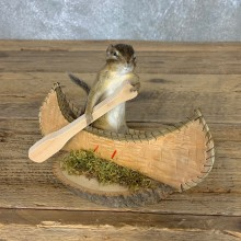 Canoe Chipmunk Novelty Mount For Sale #22605 @ The Taxidermy Store