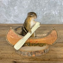 Canoe Chipmunk Novelty Mount For Sale #22608 @ The Taxidermy Store
