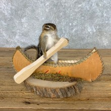 Canoe Chipmunk Novelty Mount For Sale #22610 @ The Taxidermy Store
