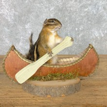 Canoe Chipmunk Novelty Mount For Sale #22611 @ The Taxidermy Store